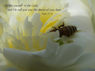 Nature background picture of flower and bee with Psalm 37 4 bible verse