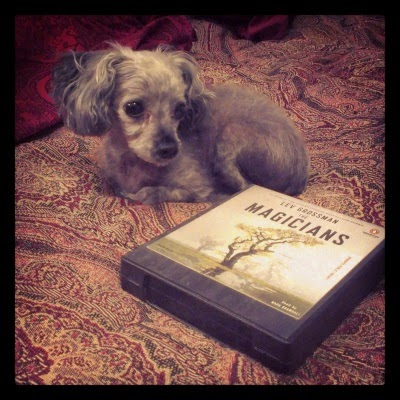 Murchie lies slightly behind an audio edition of The Magicians. The book is in an almost square CD case with the image of a sparse, golden-leafed tree on it. The tree stands almost alone on a wide, green plain studded with shallow pools. Both the book and the dog sit atop a red tapestried duvet.
