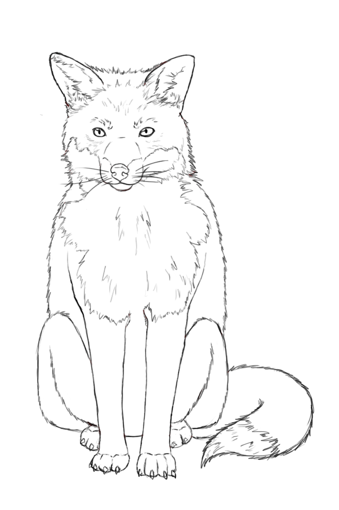 How to draw a fox - photo#5