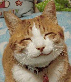 ... Nabi Sayang Sekali Terhadap Kucing, Fakta Ilmiah Bi