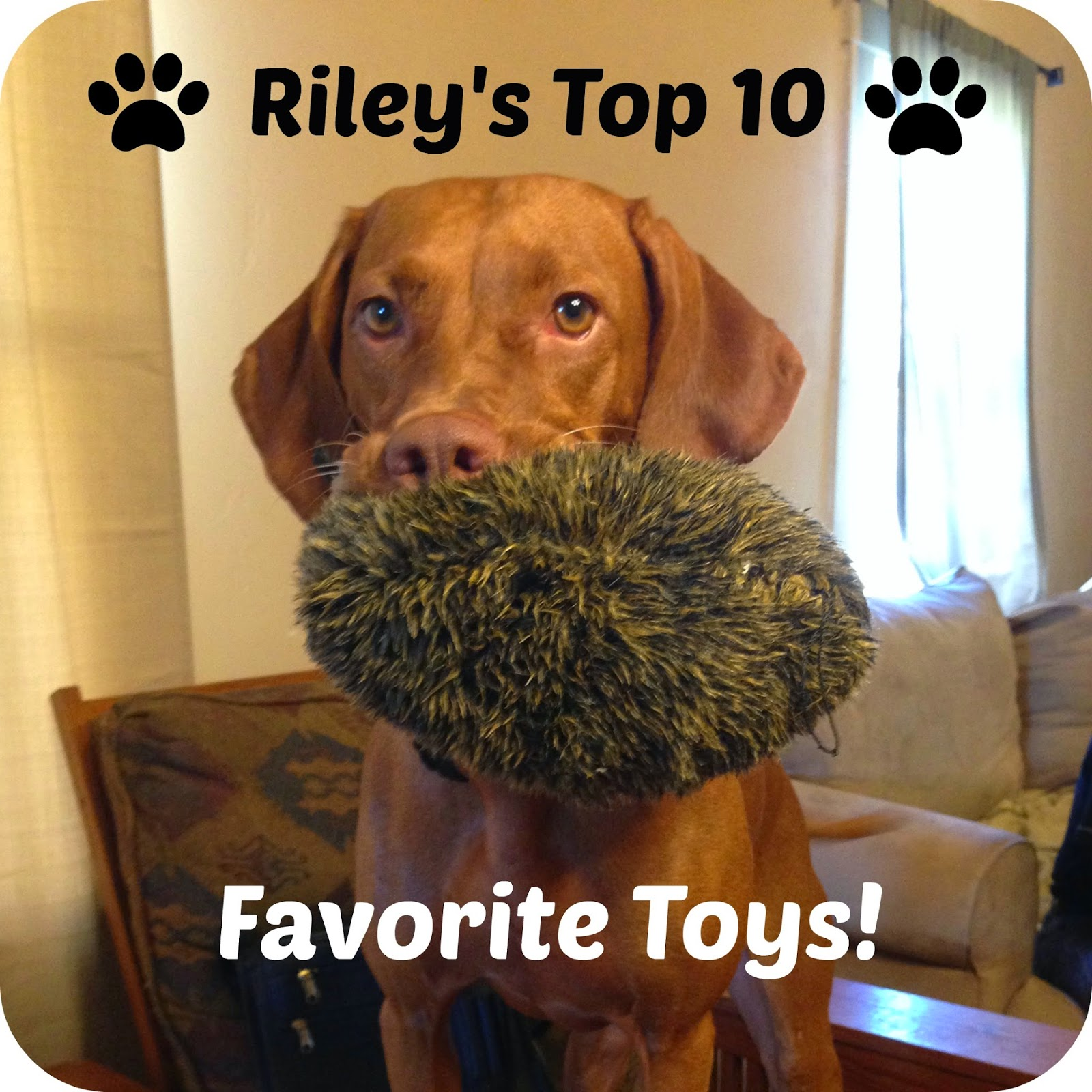 Living the life of Riley Top 10 Vizsla Toys
