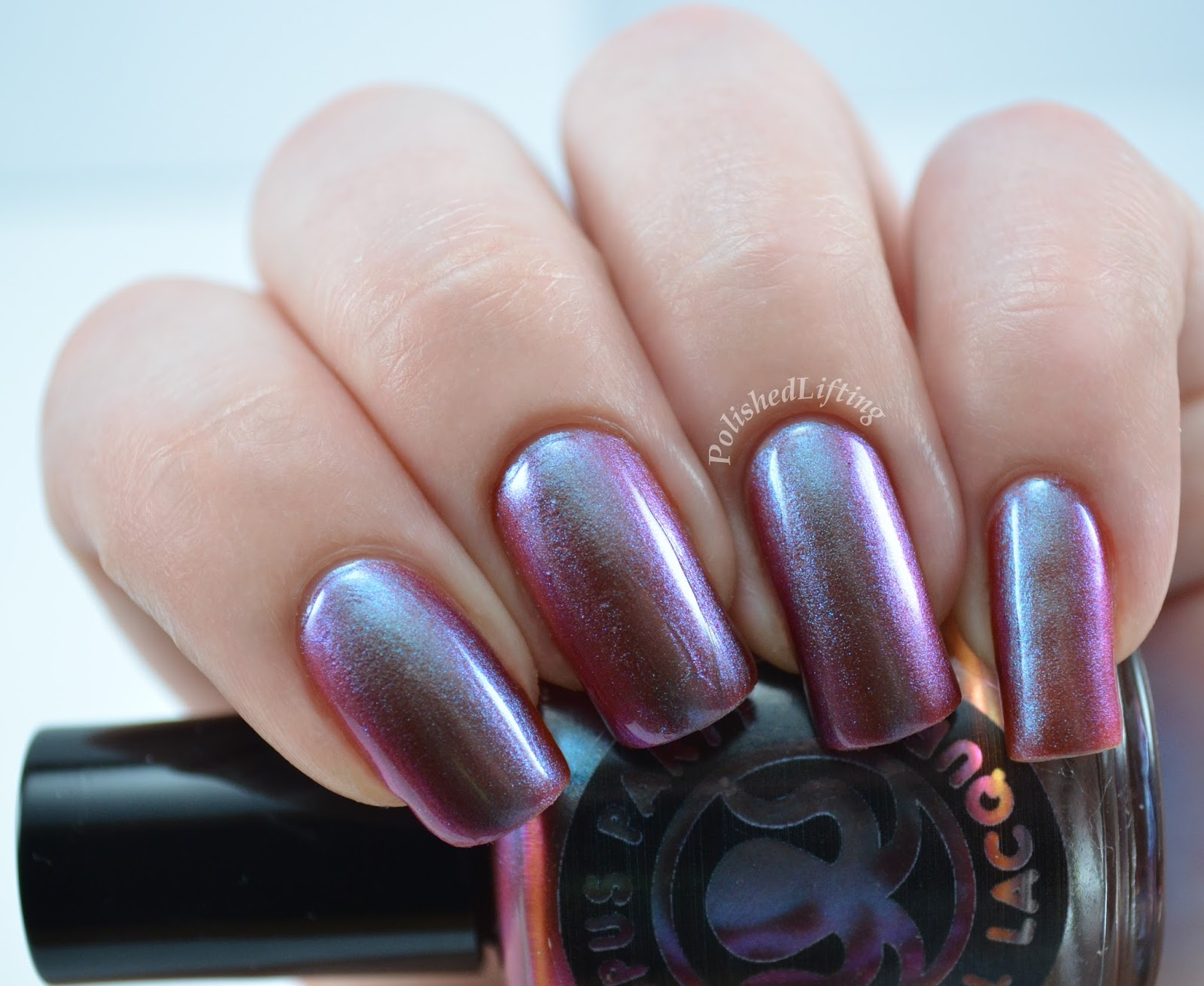 Octopus Party Nail Lacquer Shore Fire Summer 2014