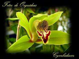 Fotos de orquídeas. Album nº-3