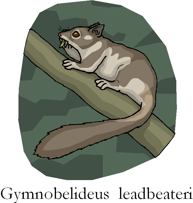 Leadbeater's Possum Gymnobelideus Leadbeateri Free Clipart