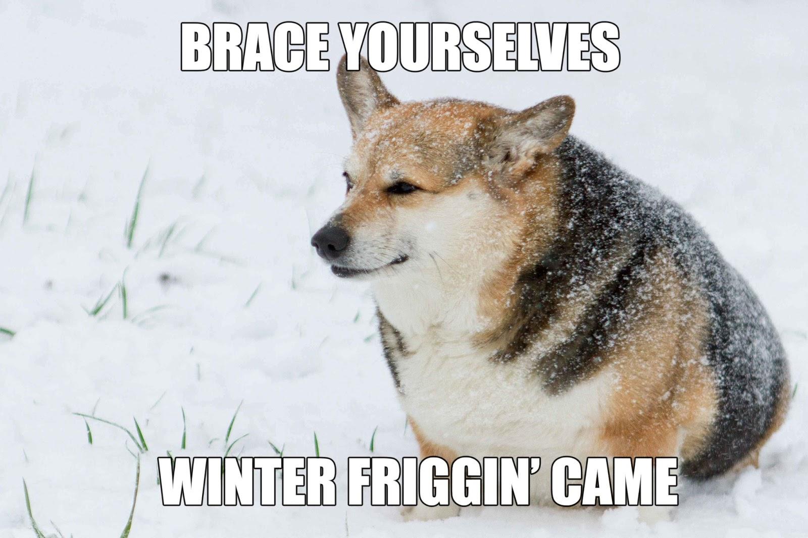 Corgi Meme for Pinterest