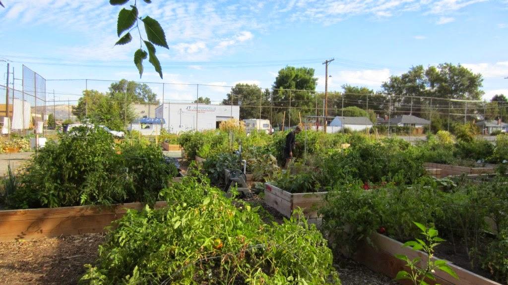 SALT CITY SINNER: Requiem For A Community Garden, Pt. 2