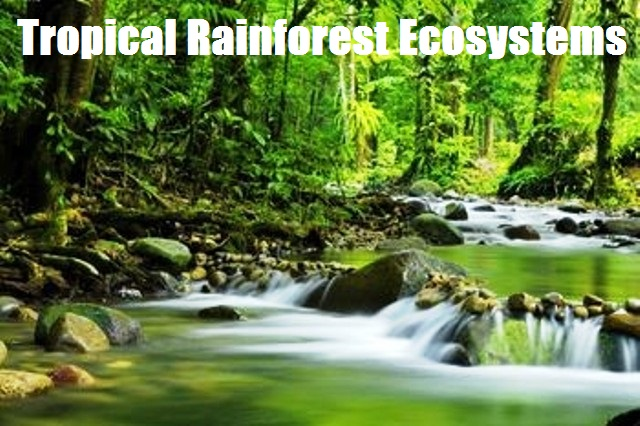 a report on the tropical rainforest Tropical-rainforest-animalscom is tracked by us since april, 2011 over the time it has been ranked as high as 350 699 in the world, while most of its traffic comes.