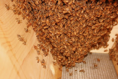 inside beehive