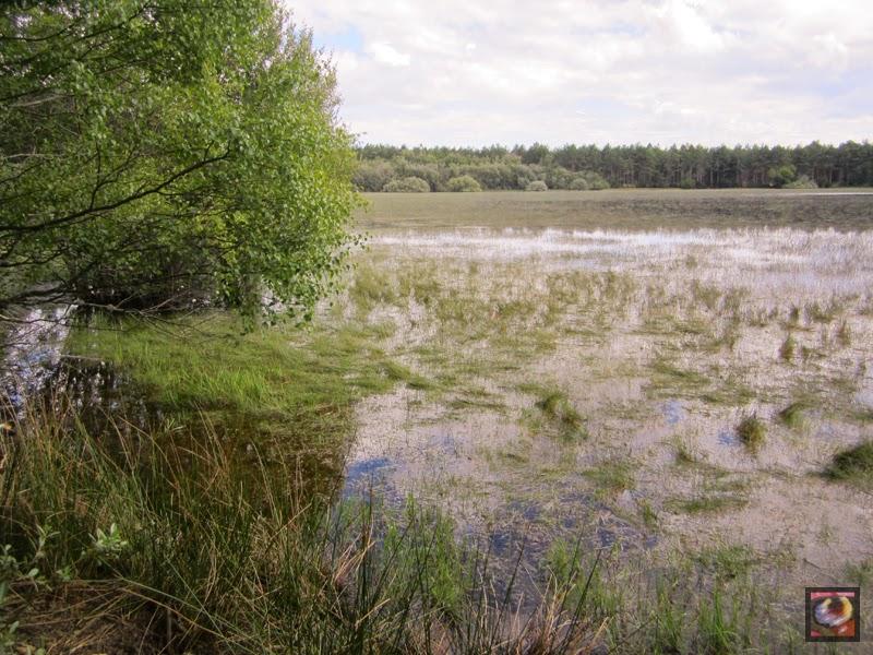 La Laguna Grande de Fontecha (Palencia)