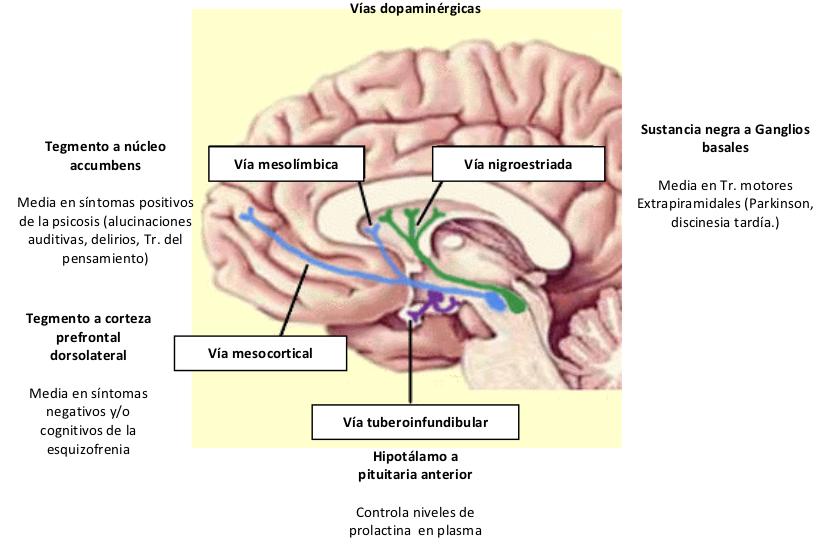 Psicopatología del Pensamiento I. Trastornos formales. | Diario de ...