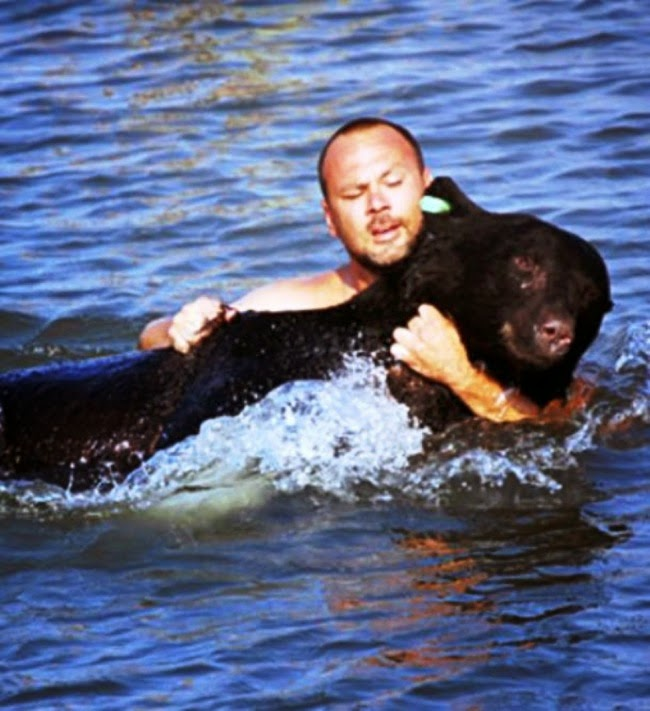 #21. Adam Warwick saved this 400 pound black bear from drowning by jumping into the ocean after it and pulling him back to shore.  - 24 Happy Animal Photos Made Possible By The People Who Saved Them.