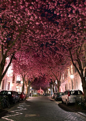 Heerstrasse, Bonn, Germany
