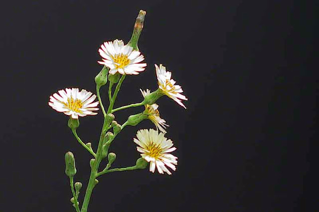 flowers, plant, black background