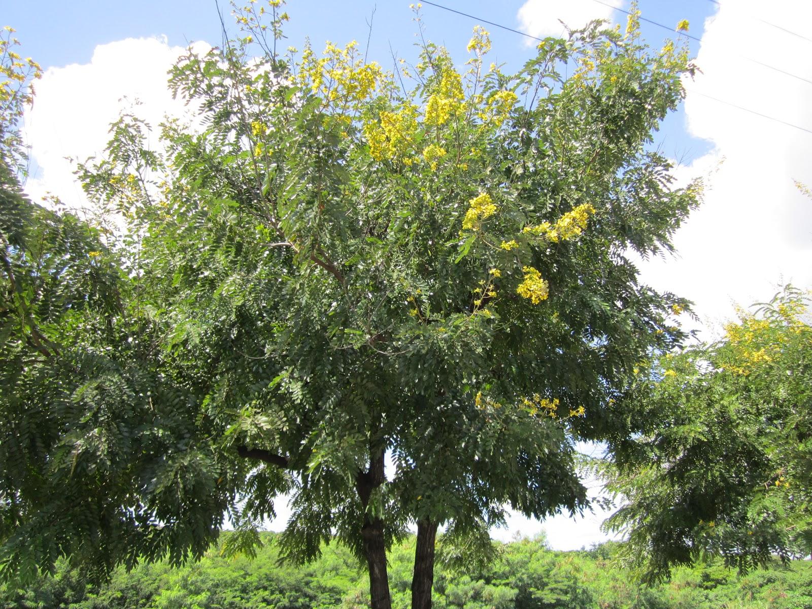 MEDICINA TRADICIONAL DOMINICANA junio 2012