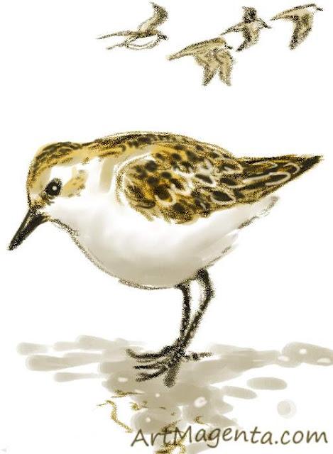 En fågelmålning av en småsnäppa från Artmagentas svenska galleri om fåglar.