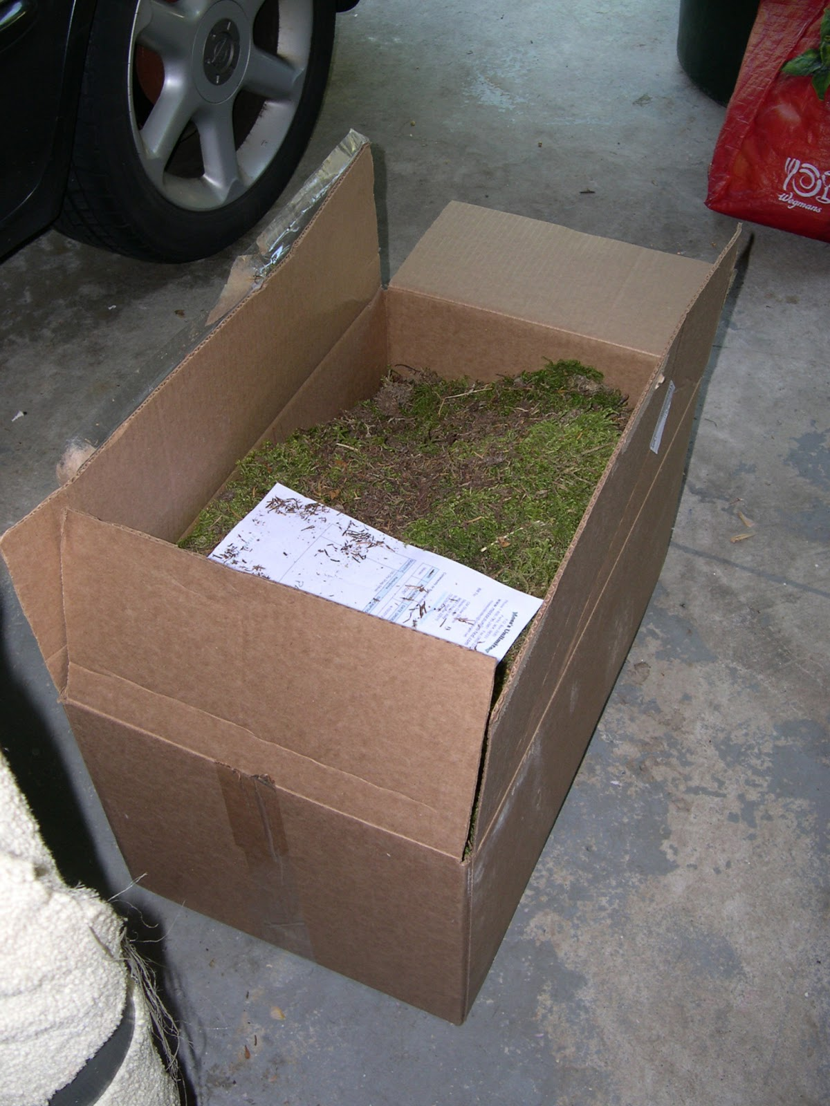 http://www.cmshawstudios.blogspot.com/2013/03/how-to-decorate-with-dry-moss.html
