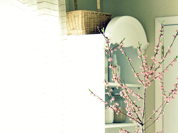 Peach tree Blossoms in my Kitchen