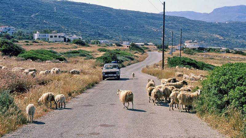 Moutons sur la route (Crète, Grèce)