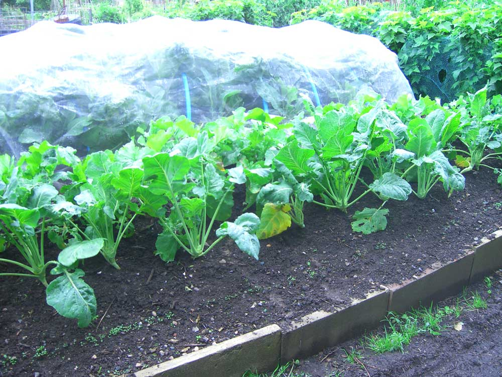 Allotment Garden Trench Hugelkultur And Hot Bed
