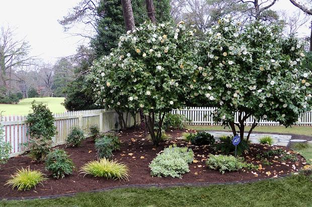 dr. dan's garden tips enhancing