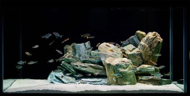 ... yang umum digunakan untuk aquascape seperti pasir atau kerikil