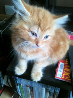 Pumpkin our new fostered addition