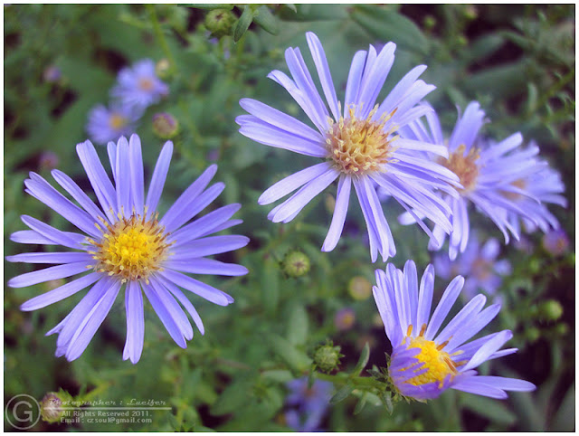 Photograph Flower