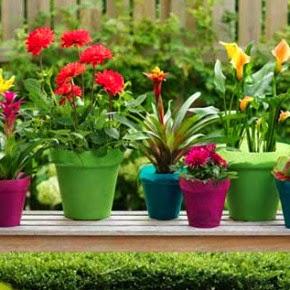 λουλούδια ανθέμιο