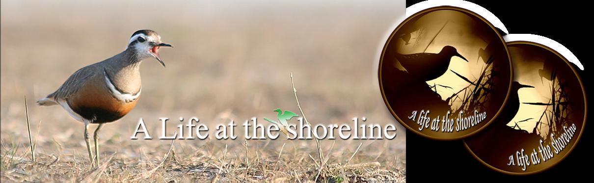 `A life at the shoreline`