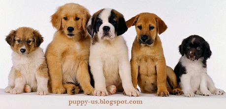 USA Puppy Pictures