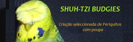 SHUH-TZI BUDGIES