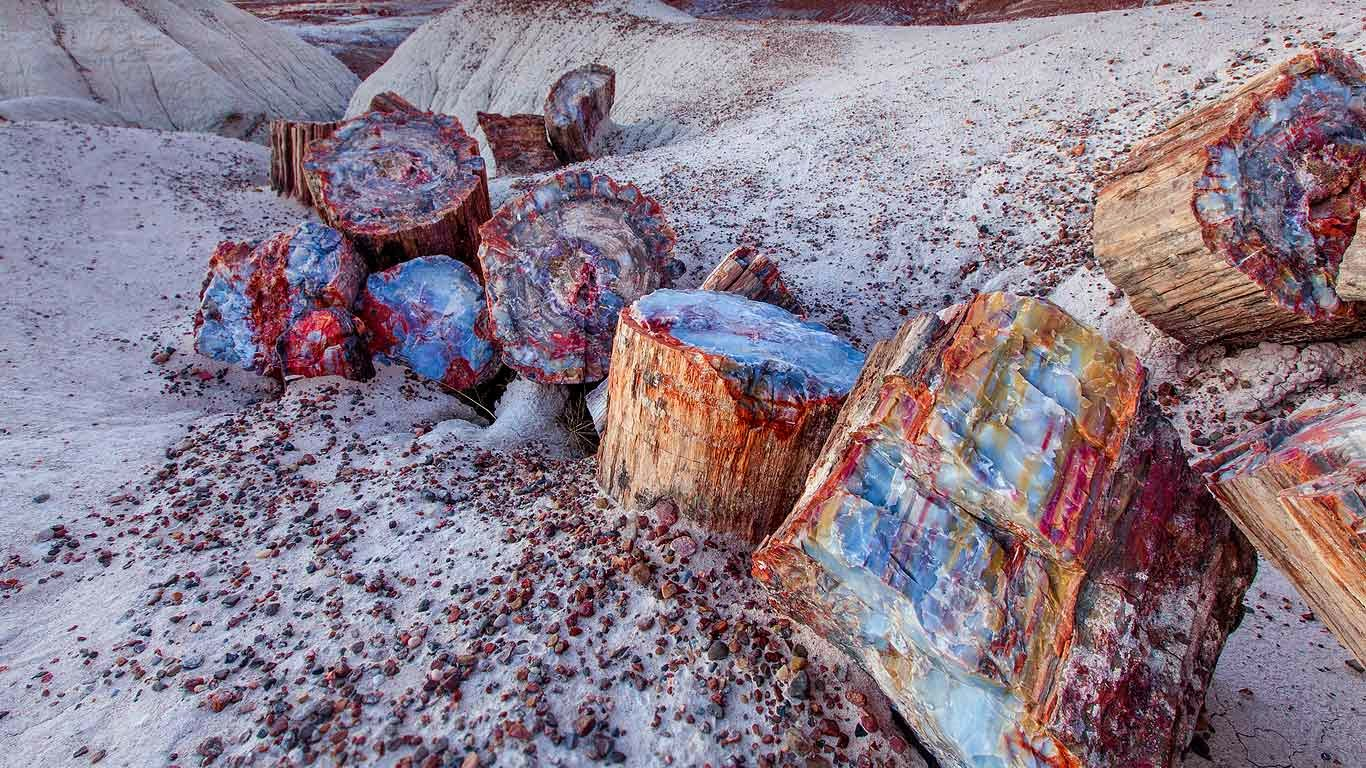 Petrified wood in the Petrified Forest National Park, Arizona (© Ian Shive/Tandem Stills + Motion) 503