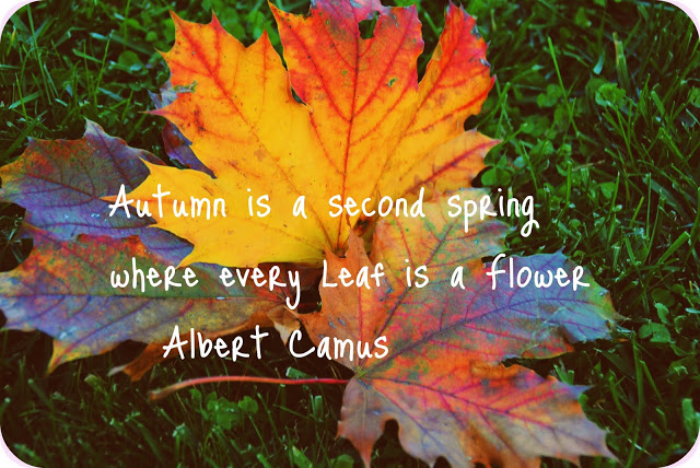 Fall Funny Quotes. QuotesGram