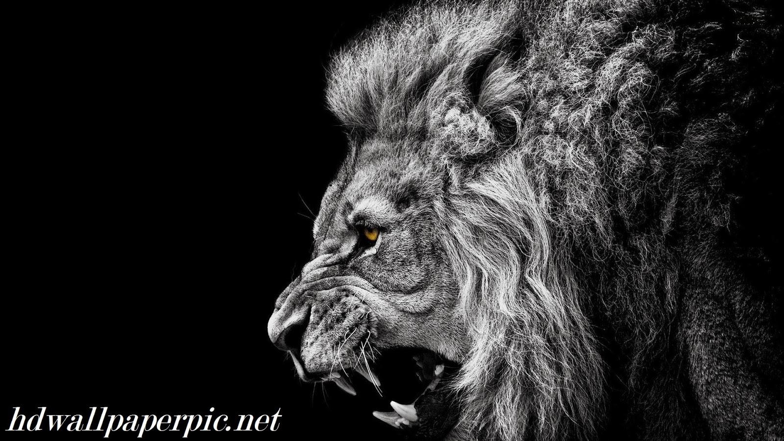 Black Roar HD Wallpaper