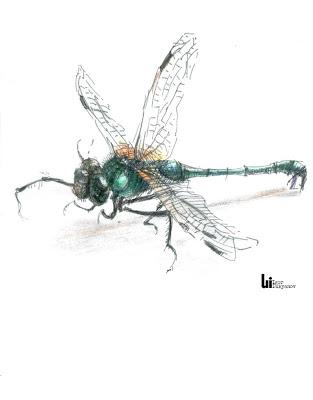 dragonfly by Igor Lukyanov