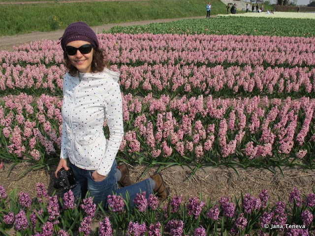 haycinths fields Holland