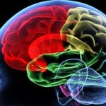 Brain Health Tips - 5 Ways to Diagnose Anterograde Amnesia