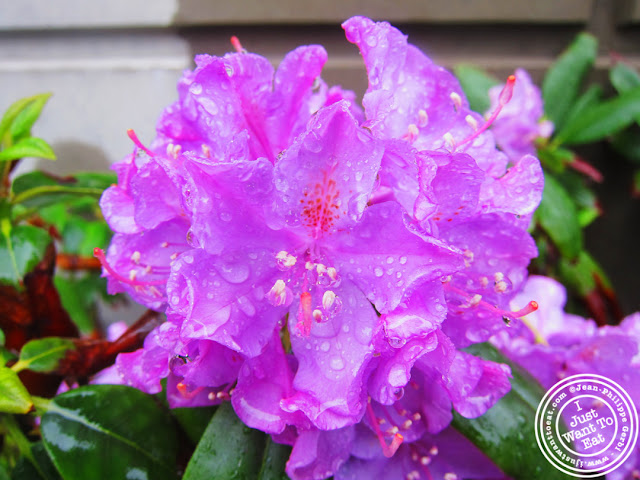 Image of Flowers with rain drops