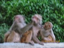 'See, Hear and Speak Evil ...'  Simian pals at Monkey Temple, Kathmandu, Nepal