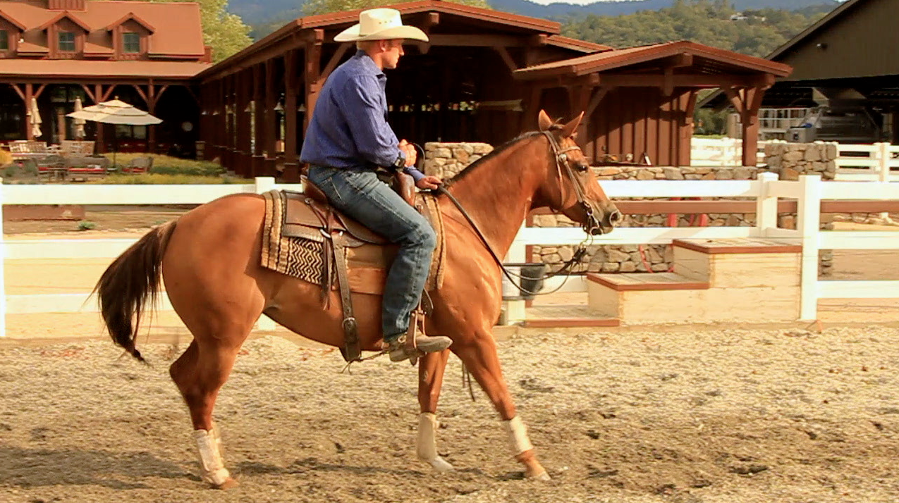 Perkins Performance Horses sonoma county wire
