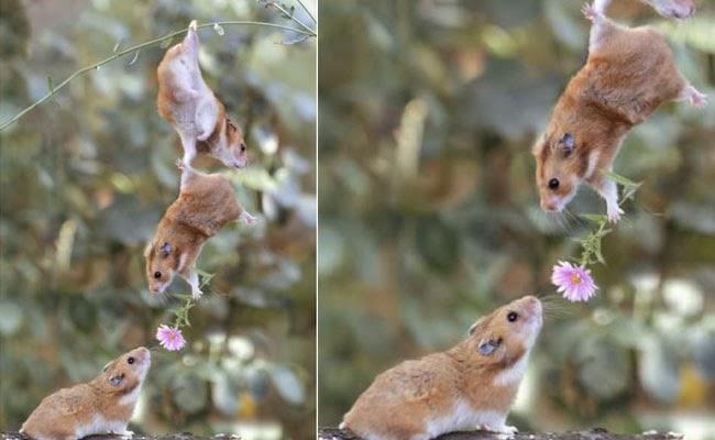 foto hewan romantis