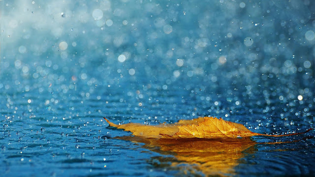 Raining Leaf Picture