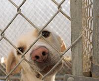 perro en un refugio de animales