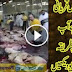 How Animal Sacrifise in Saudia Arabia