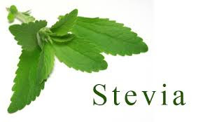 pokok stevia