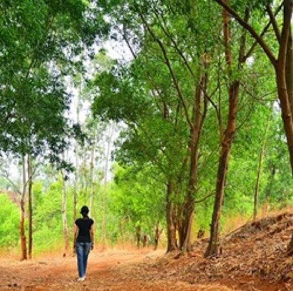Serene eco village