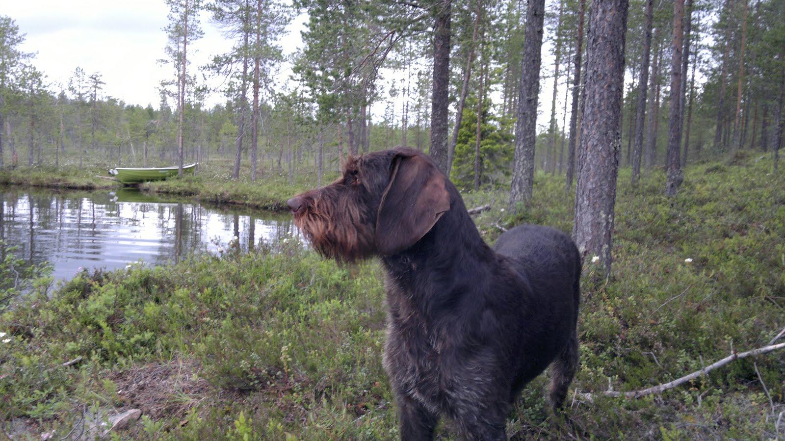 salaisuus hieronta koiran tyyliin