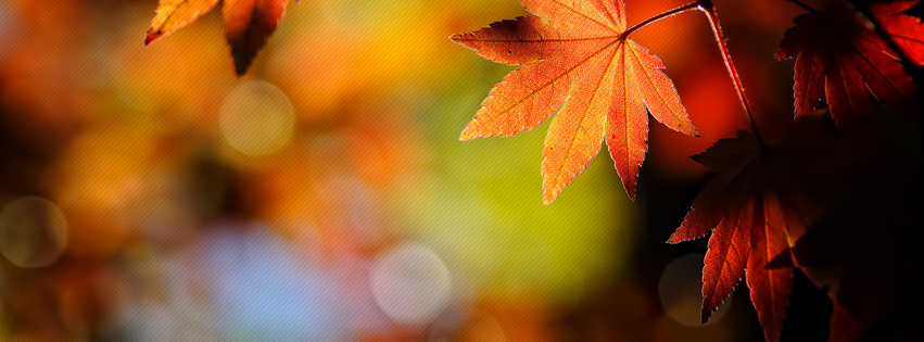 world fall autumn facebook status pictures fall autumn images quotes ...