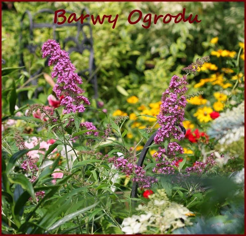 Fanpage Barwy Ogrodu