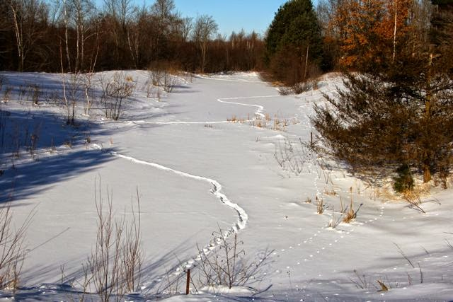 snow-covered ice on a small pond
